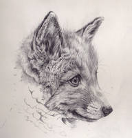 Fox Cub Mechanical Pencil Drawing