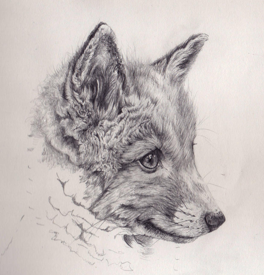 Fox cub mechanical pencil drawing by akdizzle