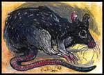 ACEO CARD Norvegian Rat by CultistCarl