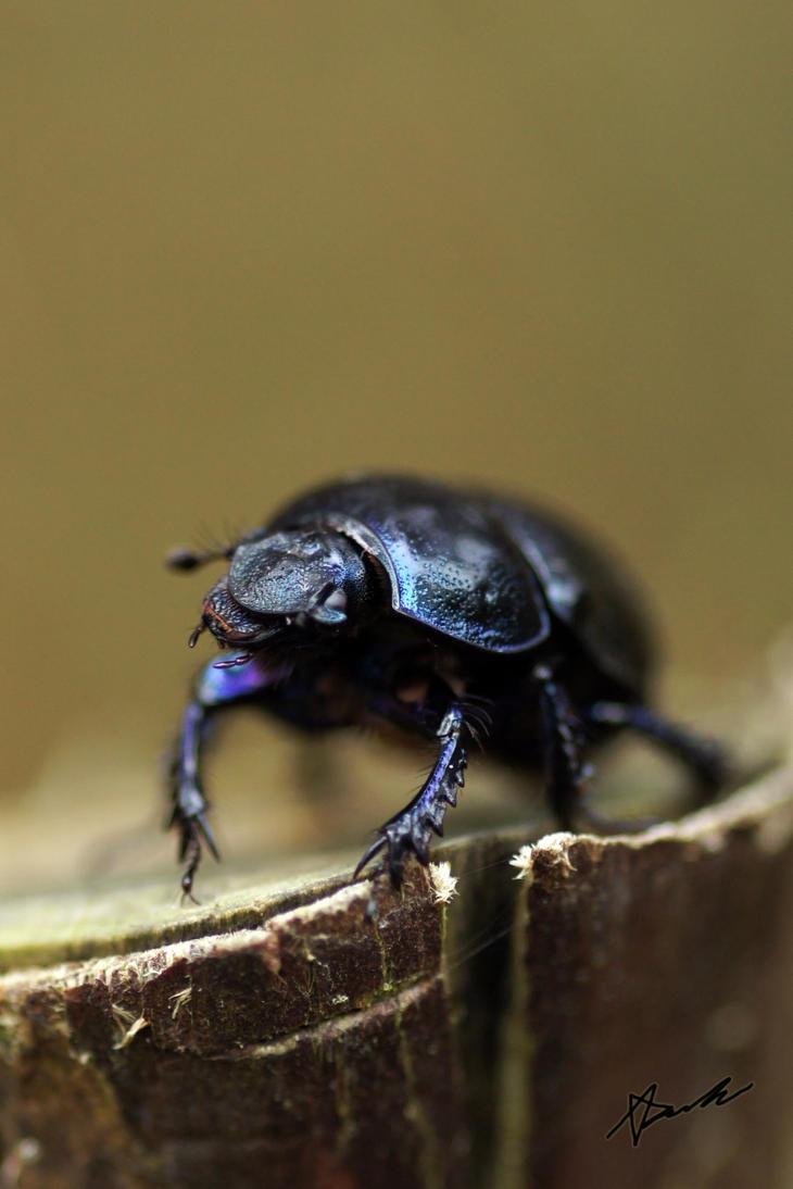 Bug by Azph