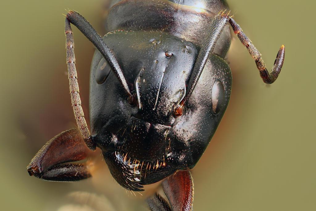 Ant E Christ by Azph