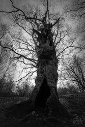 Tree by Azph