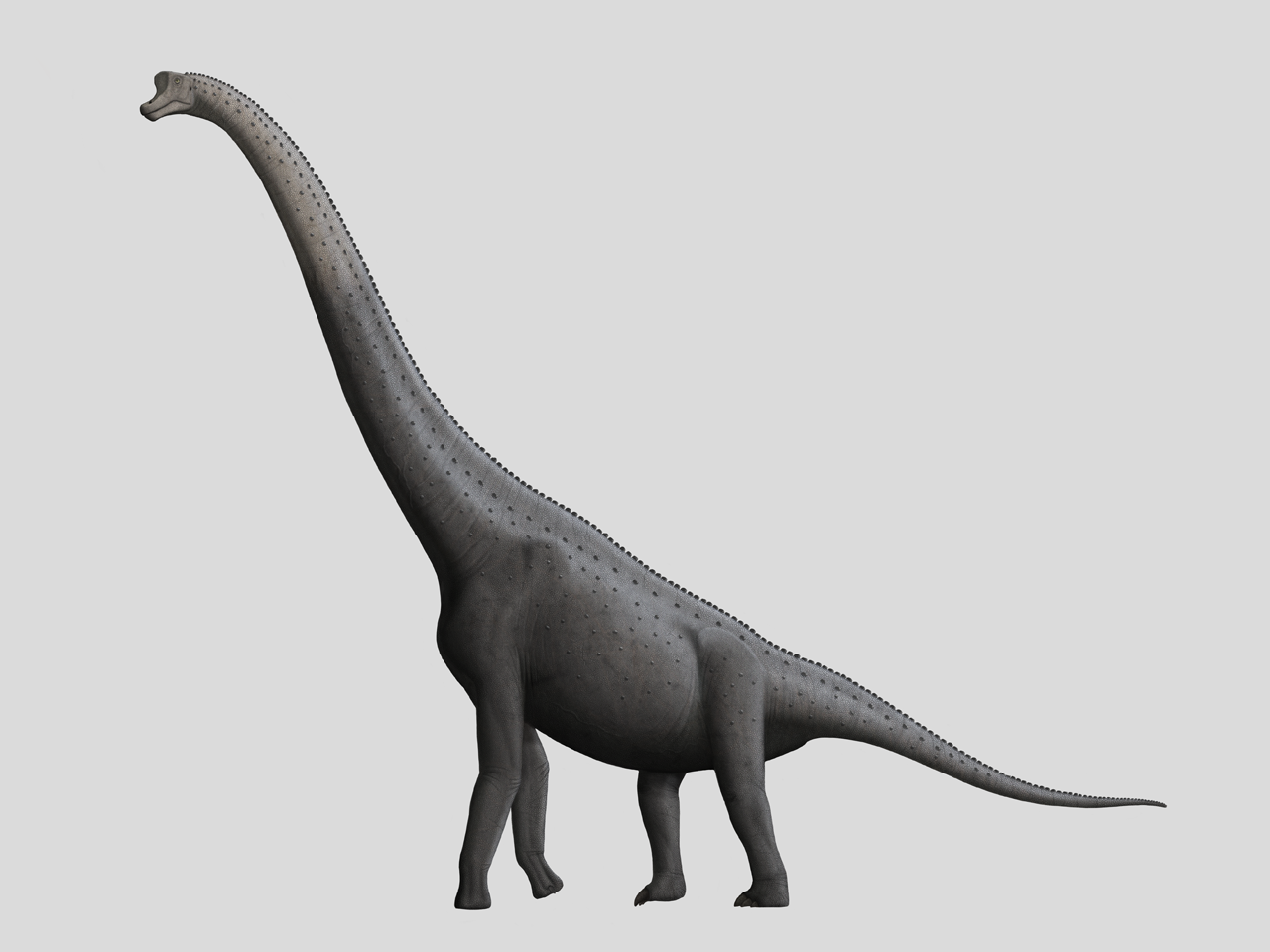 Giraffatitan by Steveoc86 on DeviantArt