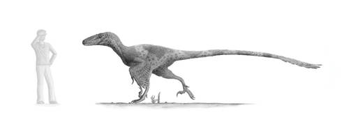Utahraptor: Version 2 by Steveoc86
