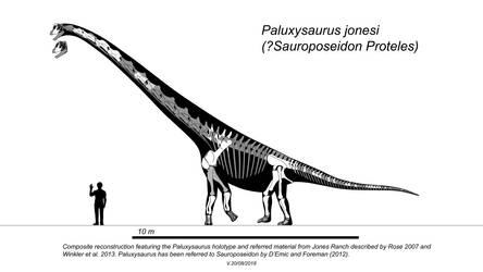 Paluxysaurus (Sauroposeidon?)