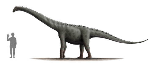 Rinconsaurus Profile: Version 2 by Steveoc86