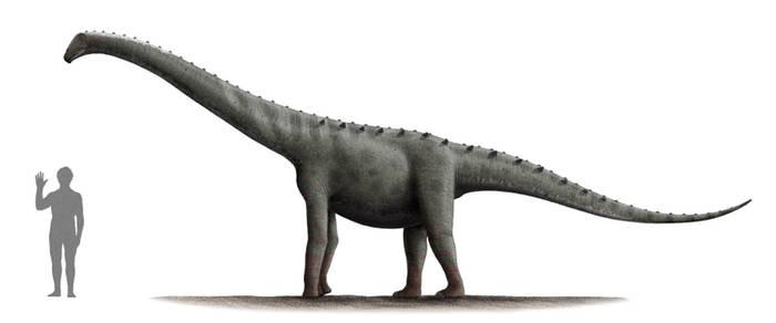 Rinconsaurus Profile: Version 2