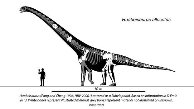 Huabeisaurus Skeletal