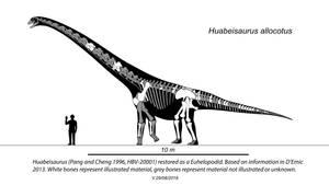 Huabeisaurus Skeletal by Steveoc86