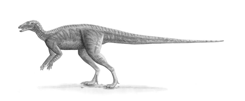 Parkosaurus Profile: June 2007 Version by Steveoc86