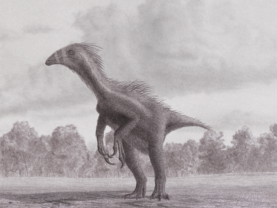 Beipiaosaurus: 2011 Version by Steveoc86