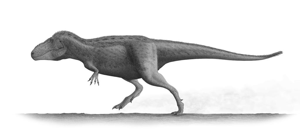 Tarbosaurus Profile by Steveoc86