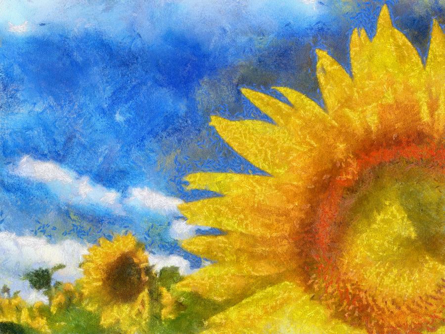 Benson Sun Flowers by diverse-norm