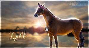Light by Horses-Are-Real