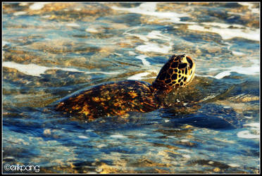 Turtle by idtapdat808