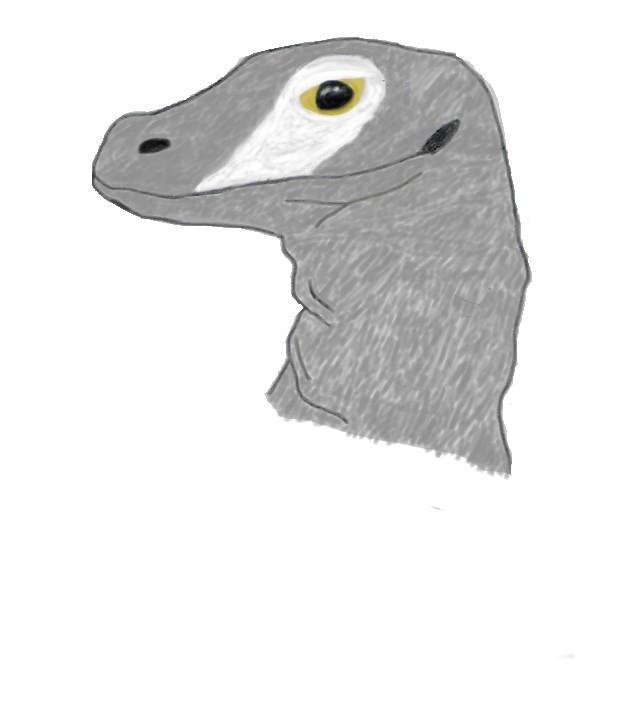 Cryptovaranus  Sylvaticus