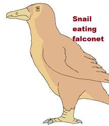 Snail eating falconet