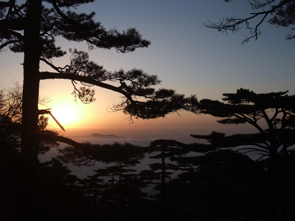HuangShan Sunrise Through Pine