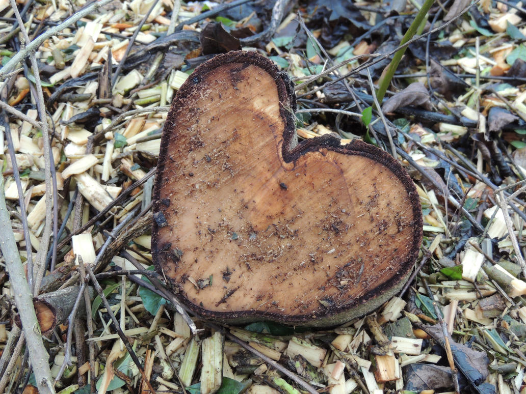 Heart shaped tree stump by Svantie