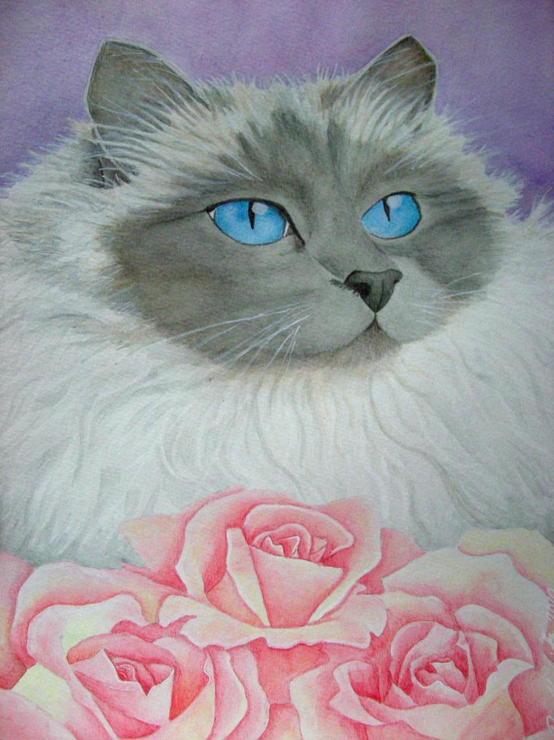Sapphire blue eyes