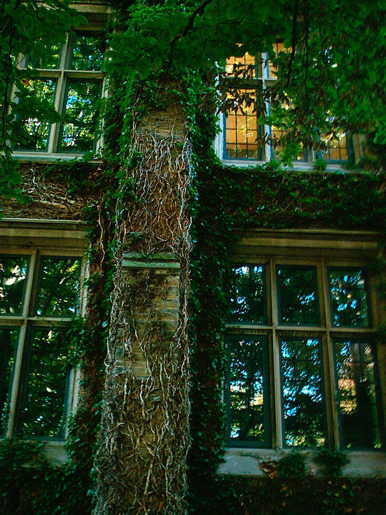 Vine covered building by Mirintala
