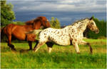 Horses 11 by Seiden-Stocks