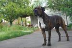 Dog - Paco 05