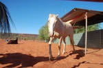 Cream Horse 4