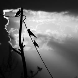 dawn by MustafaDedeogLu