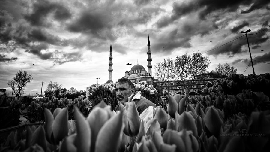 someday' by MustafaDedeogLu