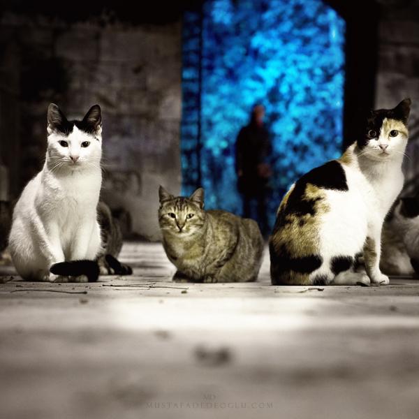 city's witnesses by MustafaDedeogLu