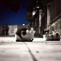 city's witnesses' by MustafaDedeogLu