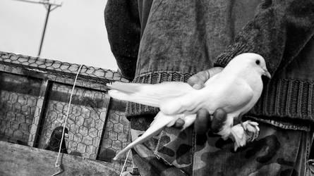 captive birds by MustafaDedeogLu