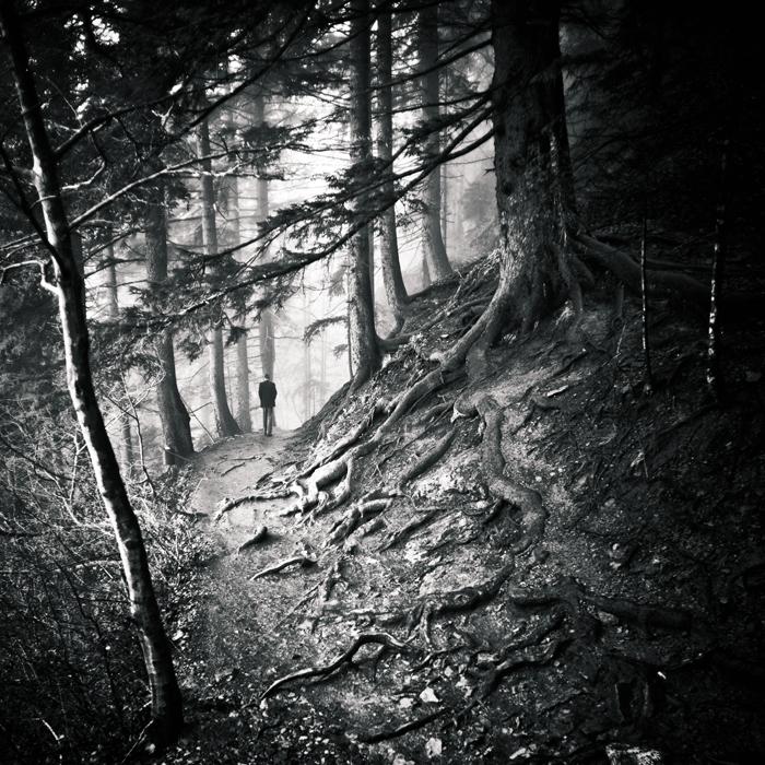 roots by MustafaDedeogLu