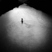 searching' by MustafaDedeogLu