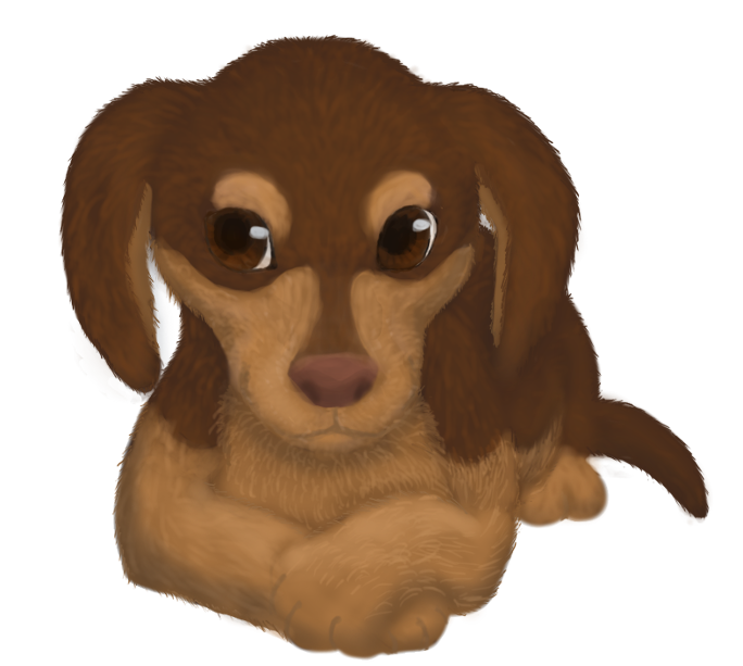 Daschund Puppy by RunningSpud