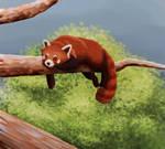 Red Panda Speedpaint