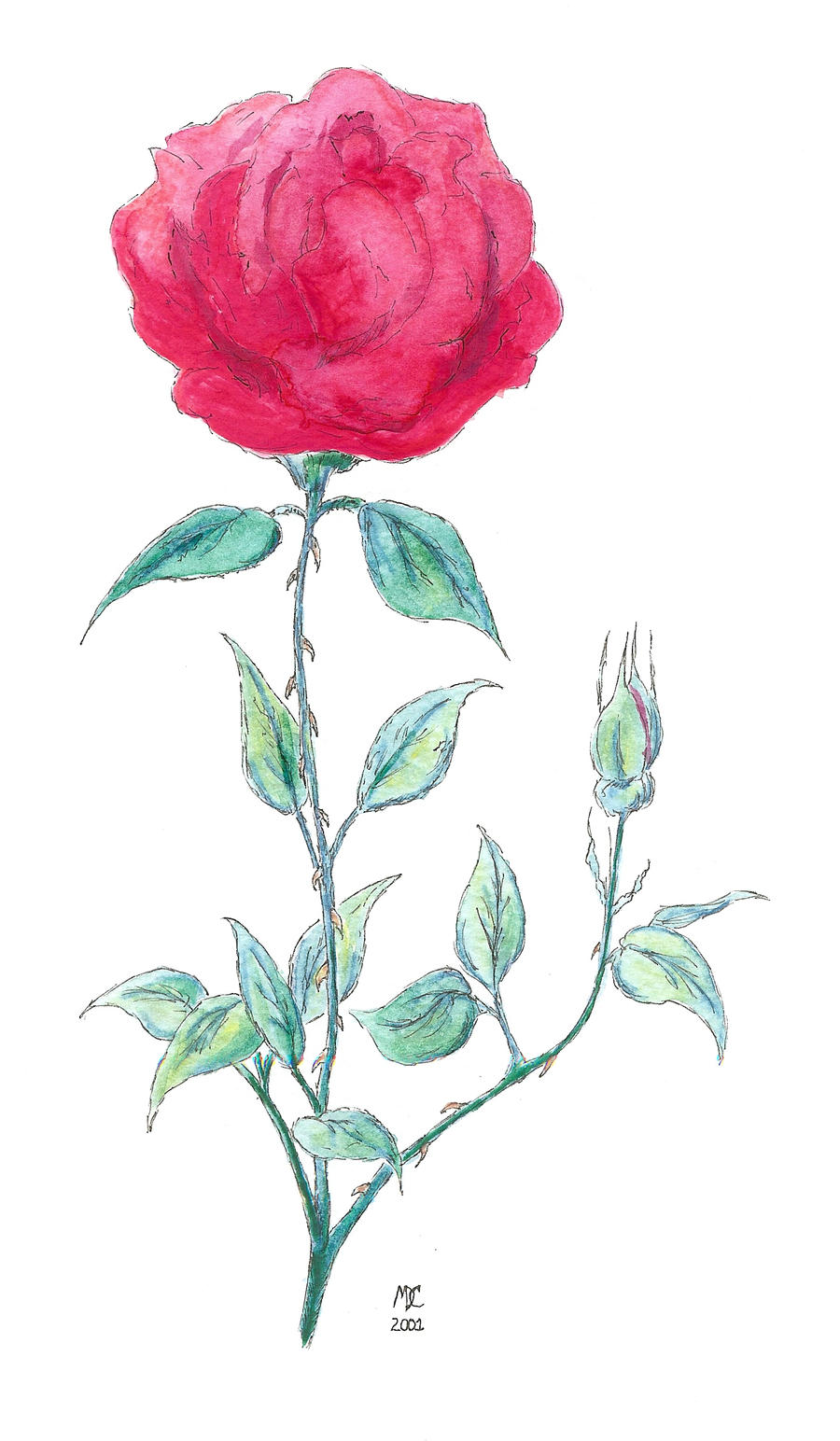 watercolor rose by MDC-PRODUCTIONS