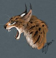 Lynx by SunStateGalleries