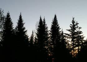 [Stock] Random Forest Landscape by Binouchetruc