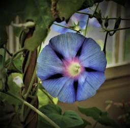 Purply Blue Flower