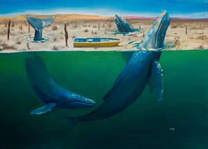 La danza de las ballenas jorobadas