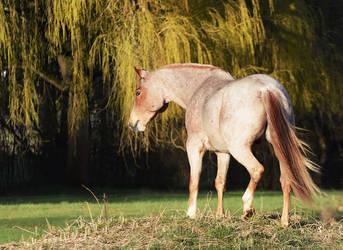 Horse Stock 72 by unantastbar