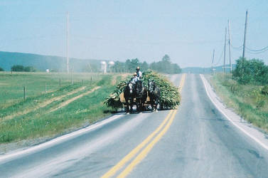 amish farmers...