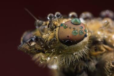 Snipefly by Abovelifesize