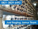 0821-3829-6492, Baglog Jamur Tiram Jumbo Semarang