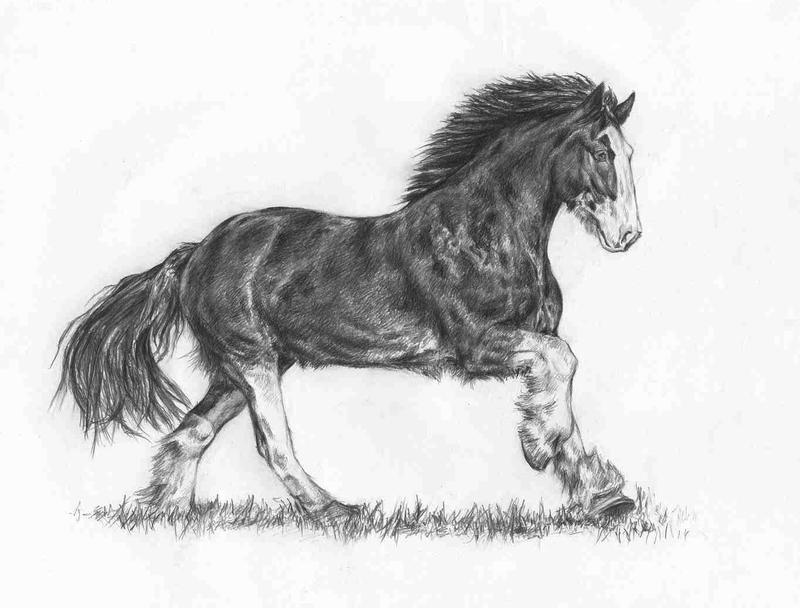 How To Draw A Horse Quickly