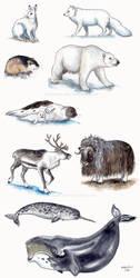 Arctic animals by Zaronen