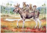 Elk bus