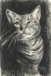 Charcoal Cat by HitmanateeArt